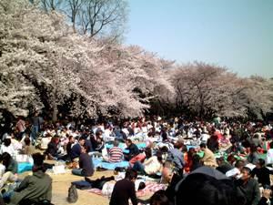 新宿御苑の花見の風景