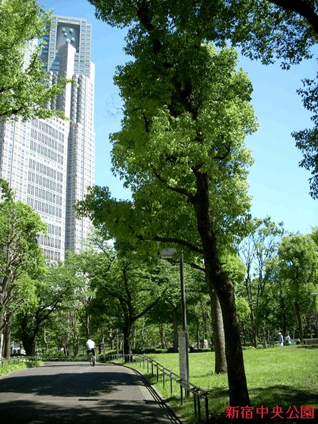 新宿中央公園(筆者撮影)