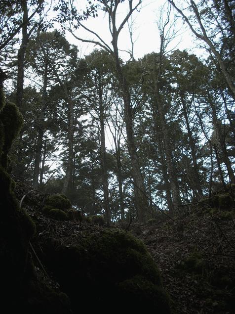 青木ヶ原の樹海
